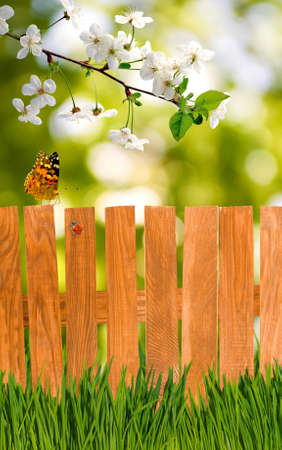 image of the fence and the grass in the garden close up Stock Photo