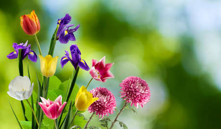 isolated image of beautiful flowers on green background. Beautiful bouquet of flowers close up.