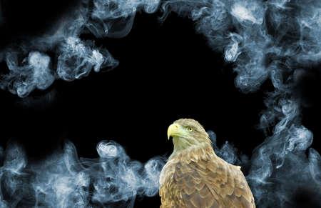 eagle on smoke background close-up