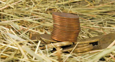 Image of coins money on hay close-up Stock Photo