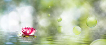image of lotus flower on the water close-up Stock Photo