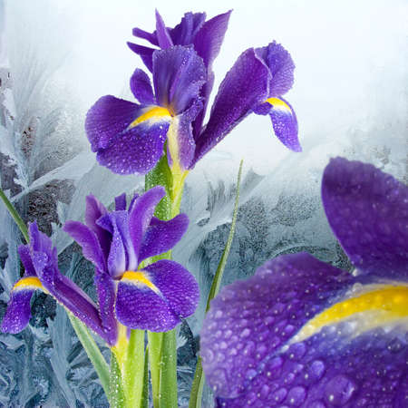 flowers on winter window background, image of beautiful flowers on window with frosty patterna background, Stock Photo