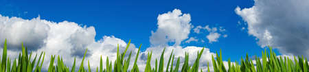 good heavens: Image of wooden board against grass and sky background Stock Photo