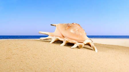 image of seashell in the sand against the sea,Image of shells on the beach by the sea,shell as symbol of holiday, tourism, vacation