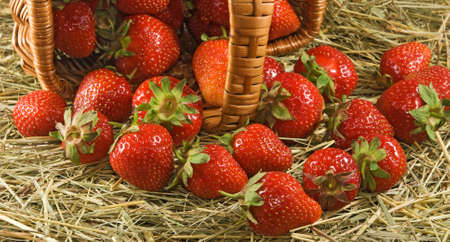 good color: Ripe strawberry in a basket close up