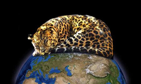 Jaguar on the globe closeup Stock Photo