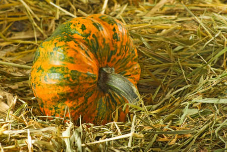 image of ripe pumpkin closeup Stock Photo