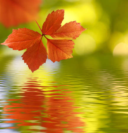image of autumn leaves over the water closeup