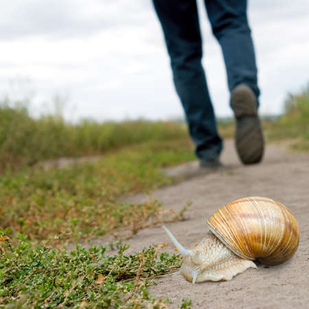 human foot and snail on the road close-up Foto de archivo