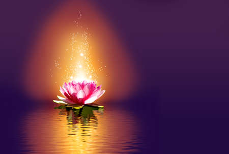 lotus flower on the water at night Stockfoto