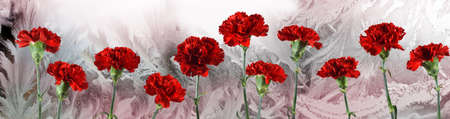 flowers on frosty window background