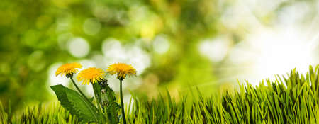 grass and flowers in the garden on blurred green background