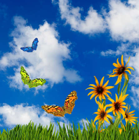 image of colorful butterflies and flowers in the garden