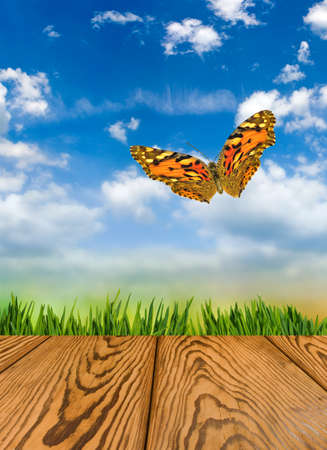 image of wooden board and butterflies against  grass background