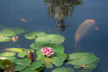 pond with fish and reflection of buddha statue Imagens