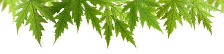 image isolée de feuilles libre