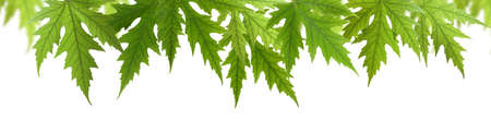 isolated image of leaves closeup