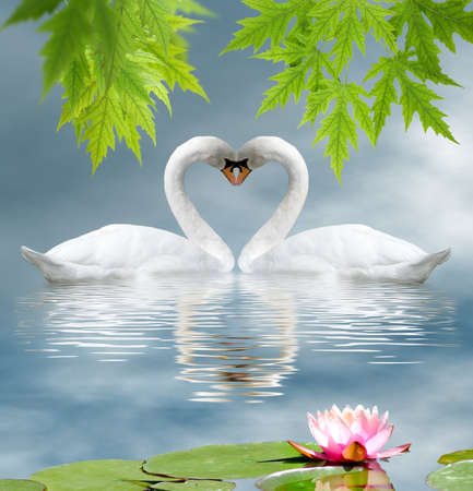 lotus flower and two swans as a symbol of love Stock Photo