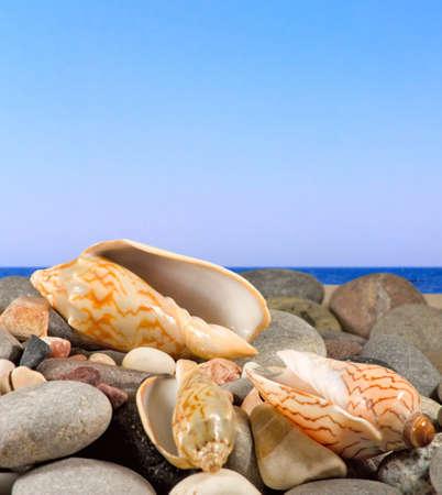 stones and sea shells on sea background Stock Photo