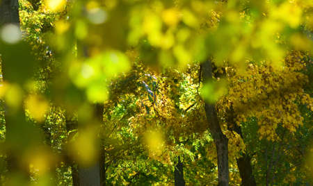 image of blurred trees in the garden Banque d'images