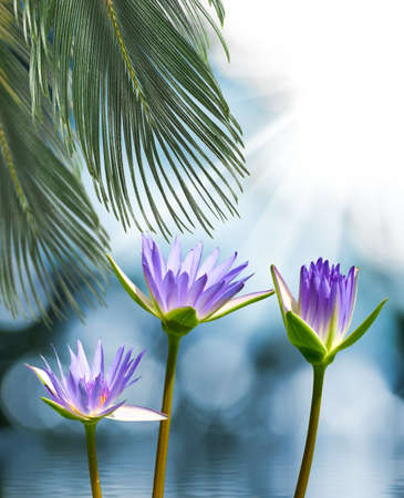 Image de belle fleur de lotus dans l'eau libre