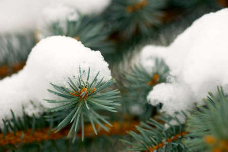 image of branch in the snow in park closeup