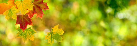 autumn leaves on blurred green background