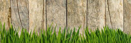 grass on fence background Reklamní fotografie