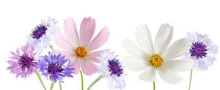 isolated image of beautiful  flowers close-up 写真素材