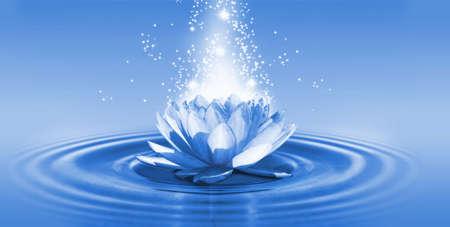 immagine di un fiore di loto sull'acqua in primo piano