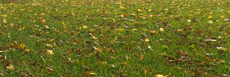 image of autumn leaves in the park on the grass