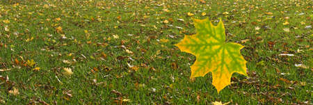 image of an autumn leaf falling in the park on the grass