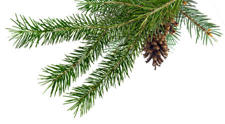 Isolated image of fir branches with a cone on a white background