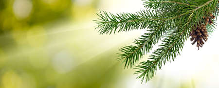 image of fir branches with a cone on a green background