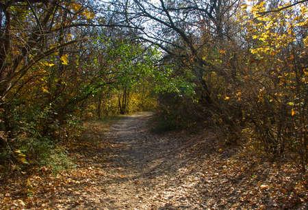 image of autumn forest landscape closeup Stok Fotoğraf