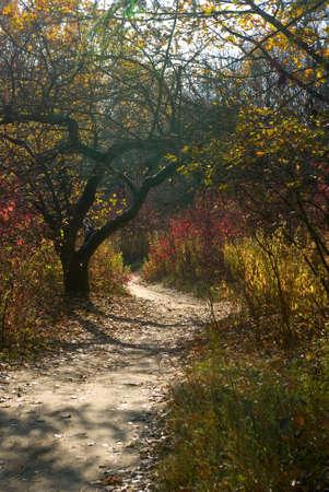 autumn forest landscape closeup