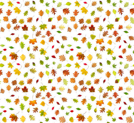 Isolated image of autumn leaves on a white background. Seamless image.