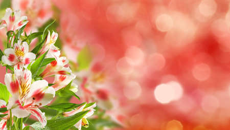 beautiful flowers in the garden on blurred background
