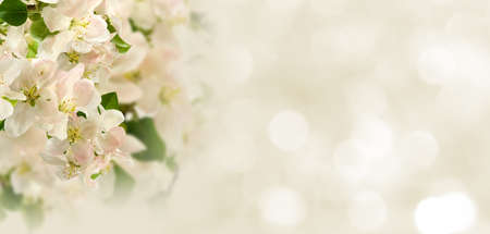 beautiful white flowers in the garden on  blurred  background сloseup