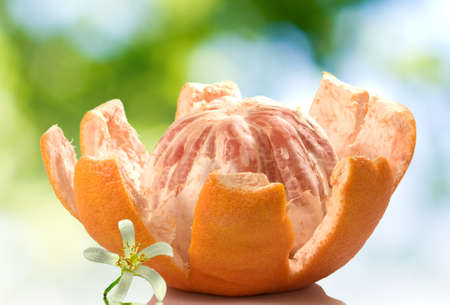 image of peeled grapefruit with a flower on a green blurred background