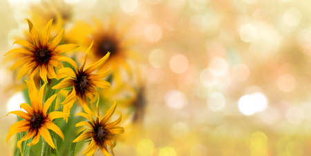 beautiful  flowers in the garden on  blurred  background сloseup