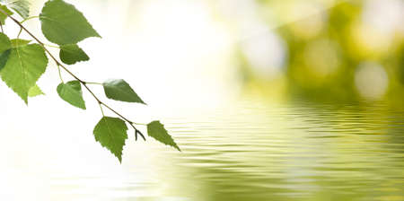 image of a tree branch above the water