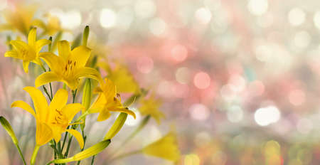 beautiful  flowers in the garden on  blurred  background сloseup Imagens
