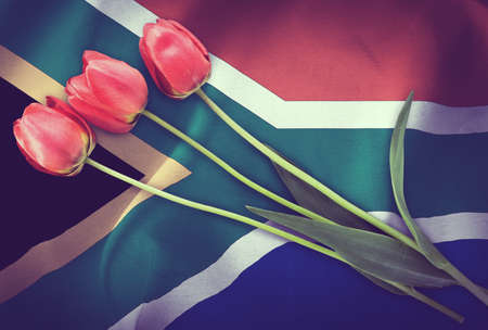 Vintage image of the flag of South Africa with three red tulips. Imagens
