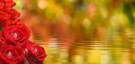 image of flowers above the water closeup