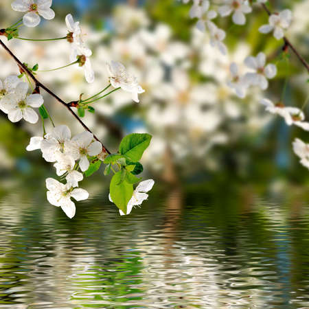 image of blooming branch over the water closeup
