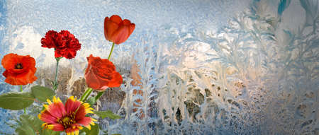 flowers on frosty window background