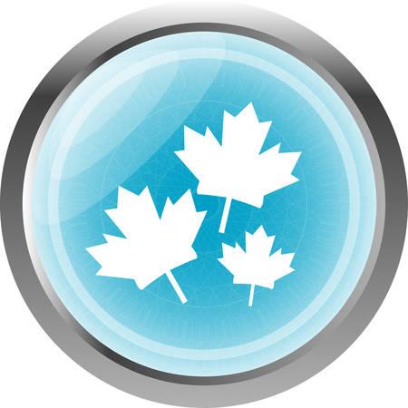 maple leaf icon: Maple leaf icon on web button isolated on white Illustration