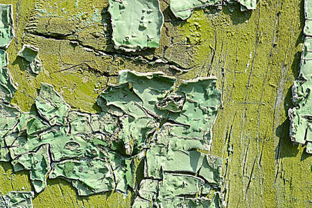dissemination: old green colored wooden plank surface