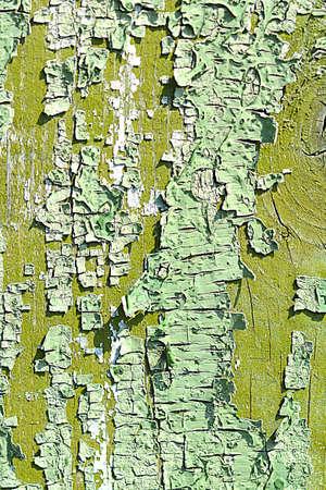 bark texture: old oak tree bark texture